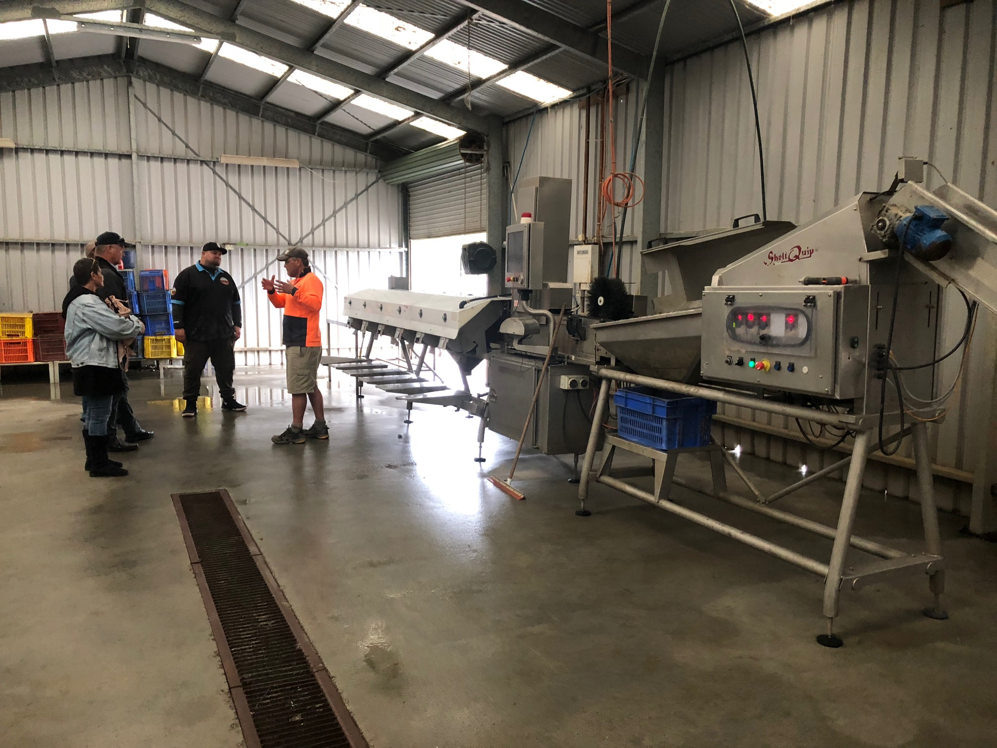 Murujuga Oyster processing and grading equipment in Tasmania